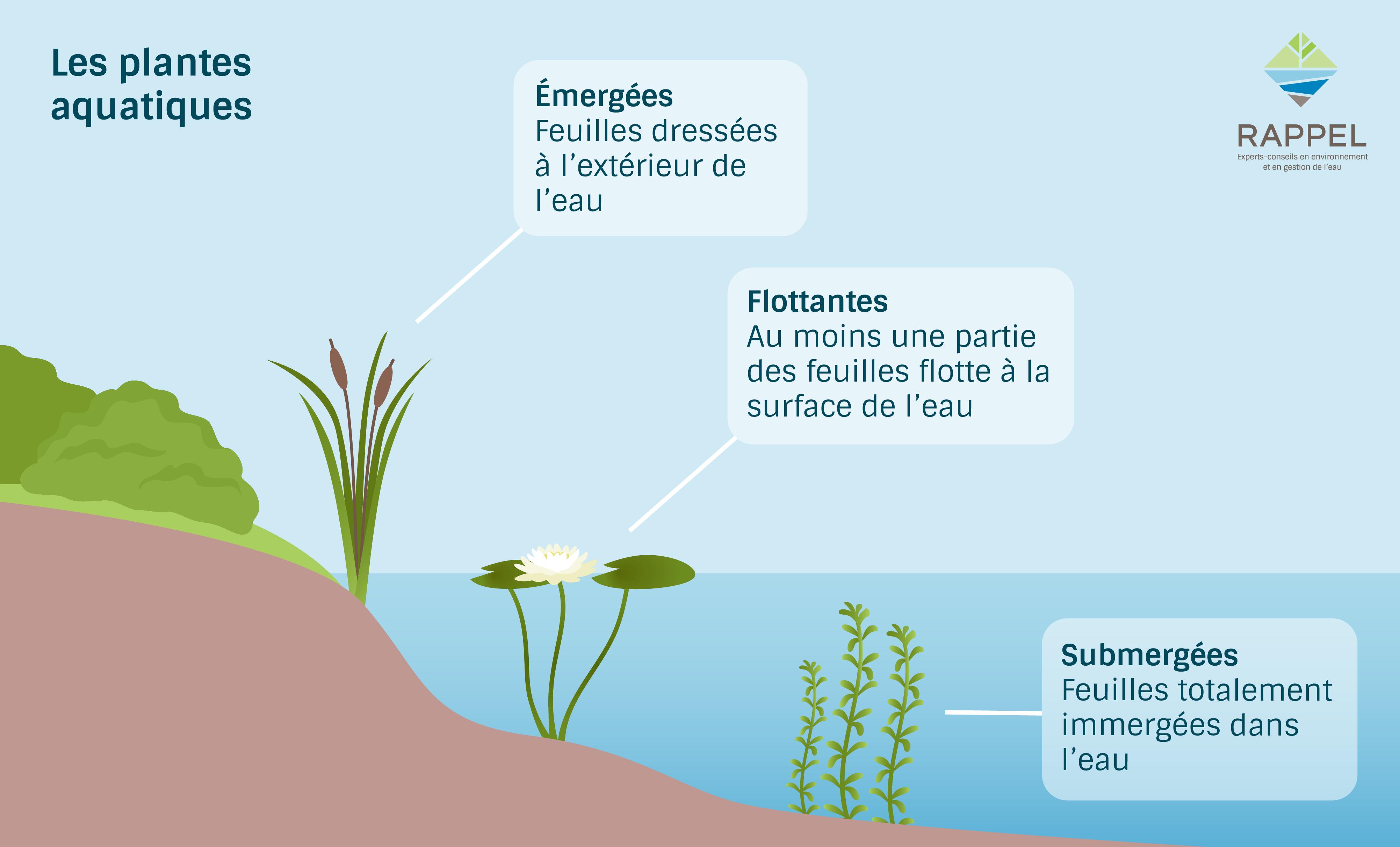 Types de plantes aquatiques